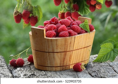Raspberry basket near raspberry bush