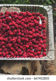 Raspberry - fresh harvest