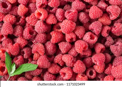 Raspberry. Fresh and sweet organic berries with leaves macro. Fruit background.  top view,  horizontal photo
