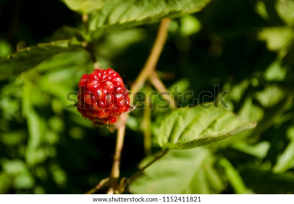 raspberry isolated on green background