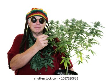 rastafarianism use of ganja as a Rastas use this scripture and others as the basis for their use of ganja regarded as wisdomweed, rasta leaders urge that ganja be smoked by followers as a religious rite and aid to meditation.