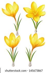 Raster illustration - set of yellow crocuses.