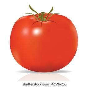 raster. tomato