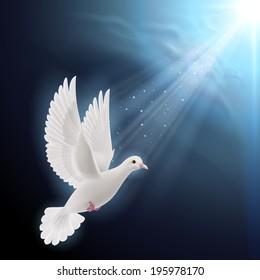 Raster version. White dove flying in sunlight against dark  blue sky as symbol of peace and hope