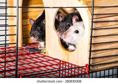 Rat Cage Images, Stock Photos & Vectors | Shutterstock