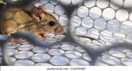 Trapped 图片、库存照片和矢量图| Shutterstock