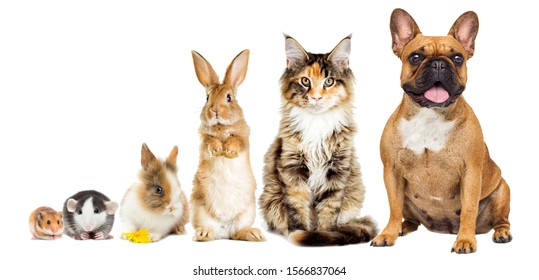rat and hamster and rabbit and cat and dog, group of animals on a white background