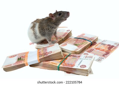 rat on packs with banknotes