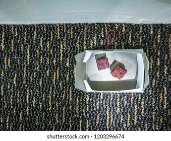 Rat poison bait in white paper bait container box isolated on carpeted floor. Focus on bait cubes.
