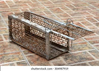 Rat Trap Images, Stock Photos & Vectors   Shutterstock