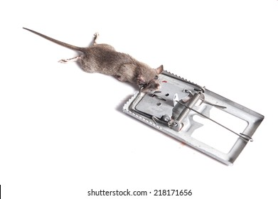 A rat trapped white background