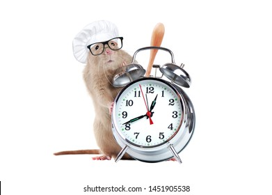Rat wearing chef hat standing on hind legs next to  alarm clock