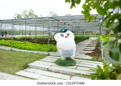 RATCHABURI - THAILAND, JANUARY 04, 2019: Coro Field in Suan Phueng, Ratchaburi. Coro Field is a new Japanese style agro-tourist destination.