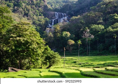 Rathna Ella, at 111 feet, is the 10th highest waterfall in Sri Lanka, situated in Kandy District.  The main occupation of the villagers in Rathna Ella is paddy cultivation.