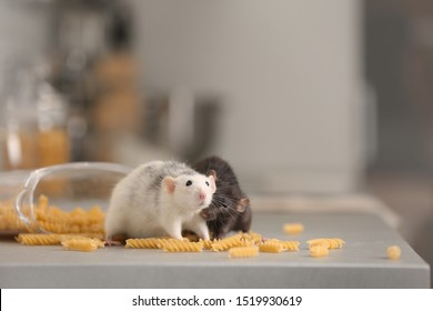 Rats near open container with pasta on kitchen counter. Household pest