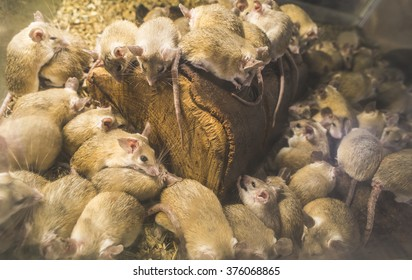Rats on wood in cell. Many rats