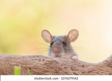Rats outdoor yard home feeder
