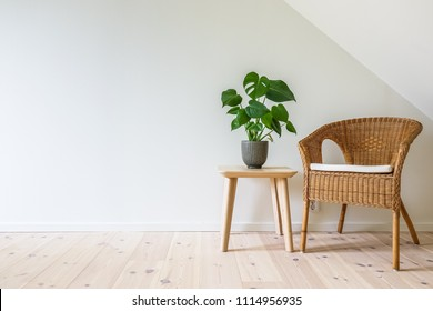 Rattan armchair with a wooden table with a potted plant, fruit salad tree (Monstera deliciosa). Empty white wall in simple living room interior. Copy space