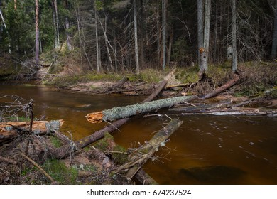 Raunis,small forest river - Shutterstock ID 674237524