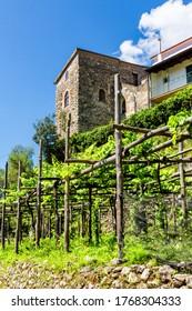 Ravello, Italien - Weinberge entlang der Trekkingroute von Scala nach Ravello an der Amalfiküste