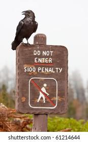 Raven, No Hiking