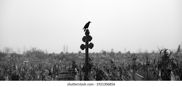 Raven on the cross in the cemetery