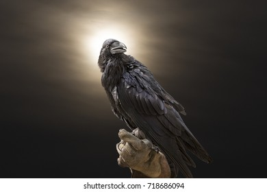 Raven on a glove with a dramatic sunset