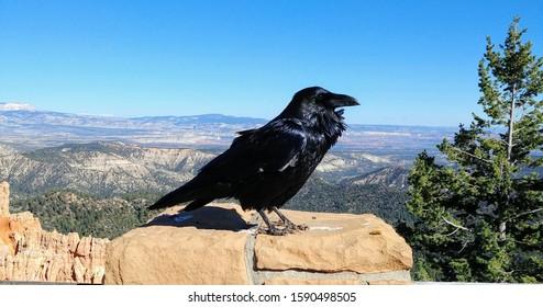 Raven Posing at Bryce Canyon