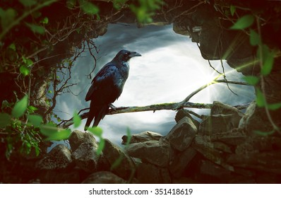 Raven sitting on a branch