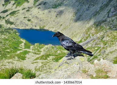 Raven sitting on a rock in the background of a Long Pond in a Caterpillar Valley. Tatra National Park in Poland. Tatra mountains.