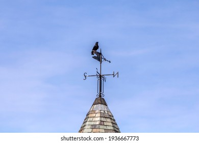 Raven sitting on top of a weathervane