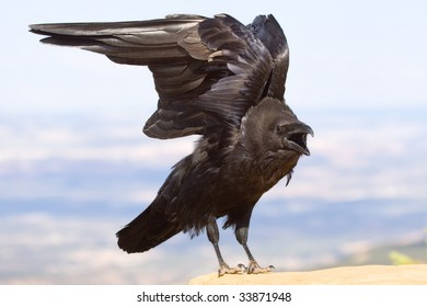 Raven Stretching Wings