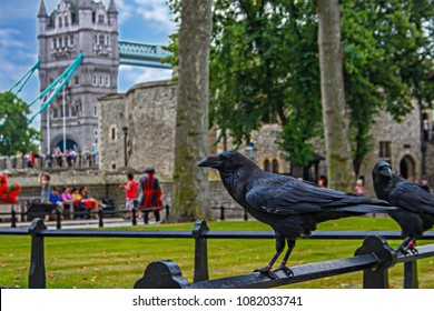 raven from Tower of London UK