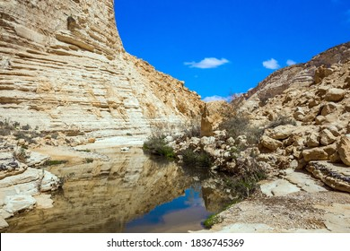 The ravine is formed by the waters of the Qing River. The magnificent gorge Ein Avdat is the most beautiful in the Negev desert. Start route. The walls of the gorge are corroded by caves. Israel.