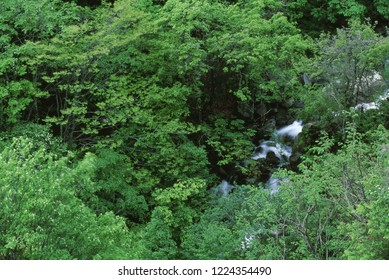 Ravine of fresh green