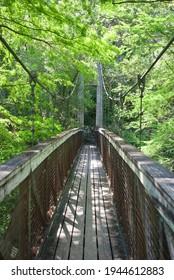 Ravine Gardens State Park Florida State Park located in Palatka, Florida. Wooden, suspension pedestrian bridge through green foliage.