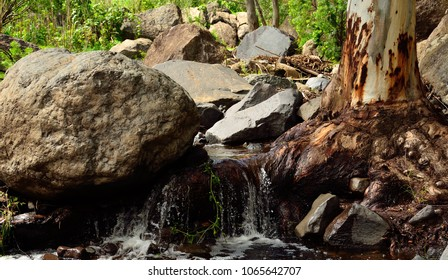 Ravine with large rocks, eucalyptus root and natural water, Valsequillo, Canary islands