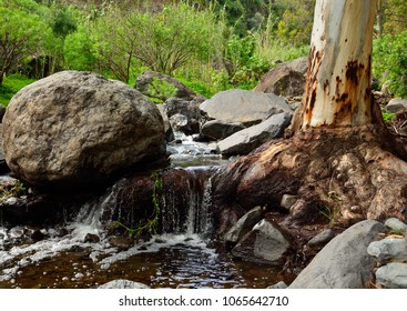 Ravine with natural water, eucalyptus root and large stones, Valsequillo, Gran canaria