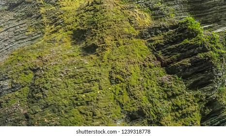 Ravine precipice in the forest crevice in the forest dangerous forest mountain pass dangerous mountain pass