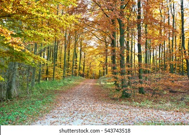Ravnsholt Skov forest in  Alleroed - Denmark in autumn