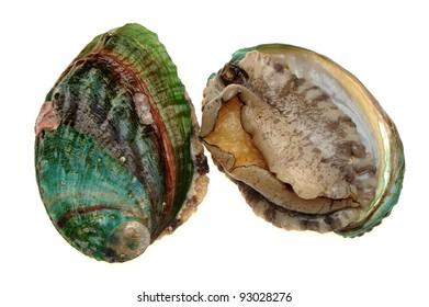 Raw abalones