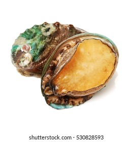 Raw abalones on the white background