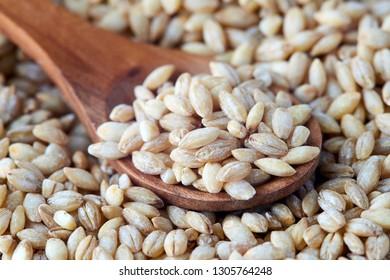 Raw barley grain (Hordeum vulgare) in wooden spoon