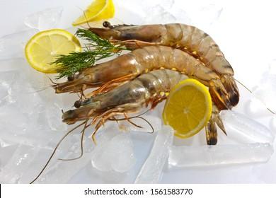 Raw Black Tiger Prawn (Penaeus monodon), shrimp with lemon, salad and dill on ice, ready for preparation