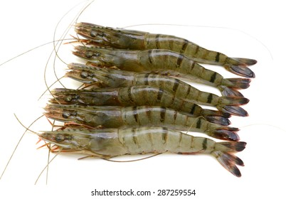 Raw black tiger shrimp isolated on white background