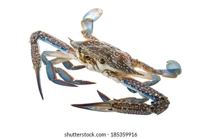 Raw blue crab - ready to cook