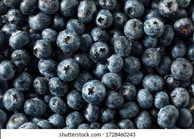 Raw Blue Organic Blueberries in a Bunch