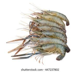raw blue shrimps isolated on white