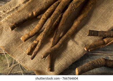 Raw Brown Organic Burdock Root on Burlap