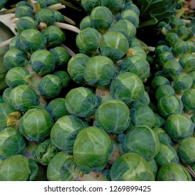 Raw Brussels Sprouts on the stem